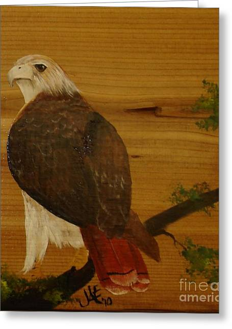 Redtail Greeting Card by Jena Gillam