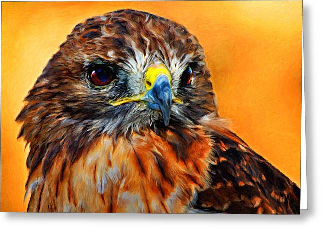 Redtailed Hawk Greeting Card