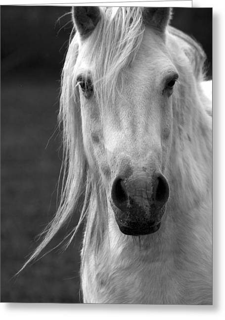 Redwings Horse In Monotone2 Greeting Card by Darren Burroughs