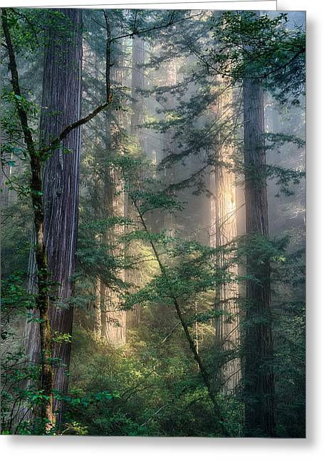 Redwood Network Greeting Card by Scott Warner