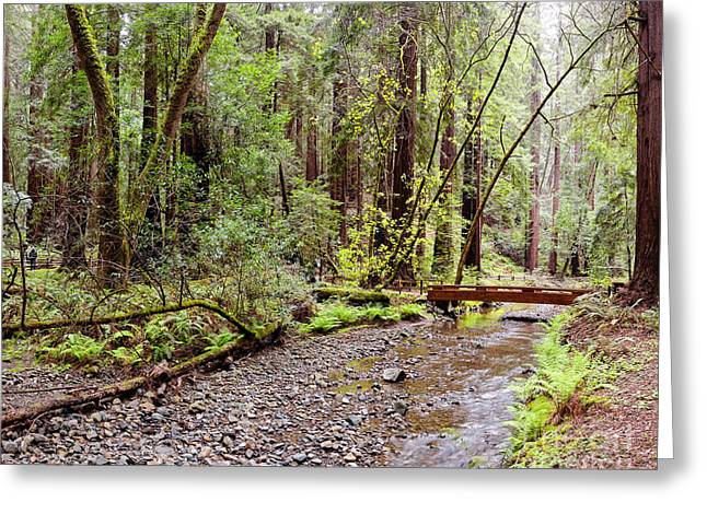 Redwood Creek Flowing Through Muir Woods National Monument - Mill Valley Marin County California Greeting Card