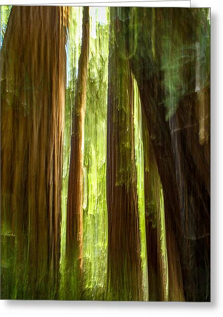 Redwood Dream Greeting Card by Bill Gallagher