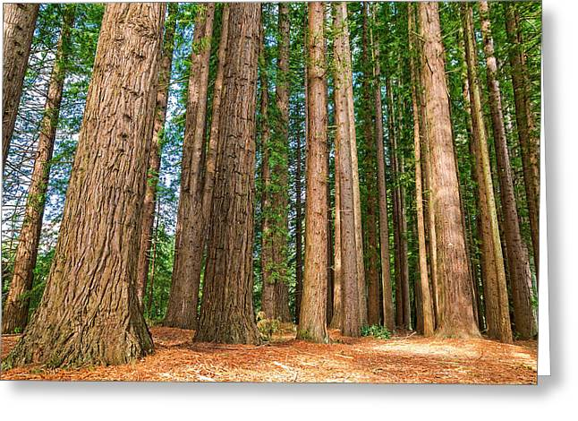 Redwood Forest Greeting Card by Martin Capek