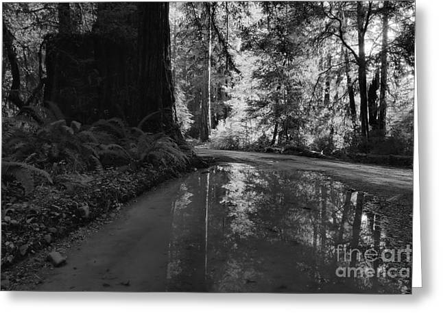 Redwood Reflections Black And White Landscape Greeting Card by Adam Jewell