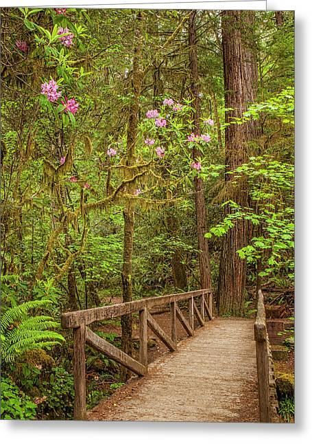 Redwood Trail  In The Spring Greeting Card by Andrew Soundarajan