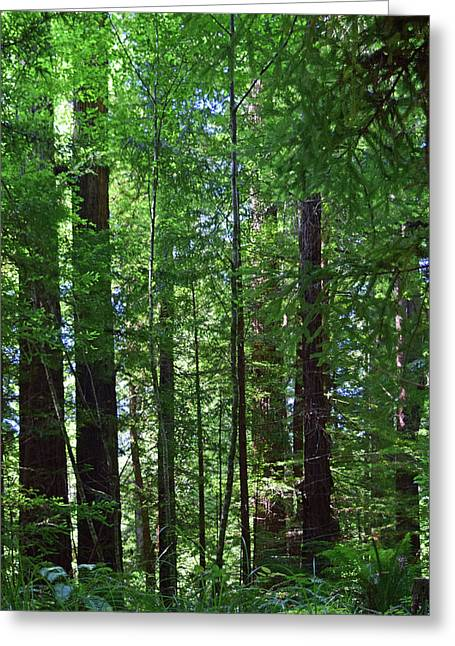 Redwoods No. 3-1 Greeting Card