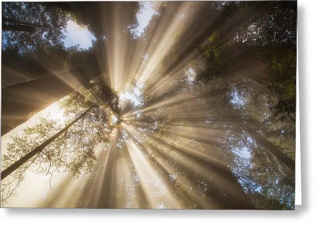 Redwoods Sunburst Greeting Card by Kunal Mehra
