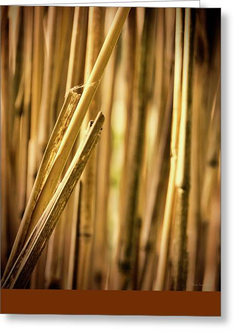 Reed Greeting Card by Wim Lanclus