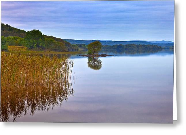 Reeds And An Islet In Lough Macnean Greeting Card by Panoramic Images
