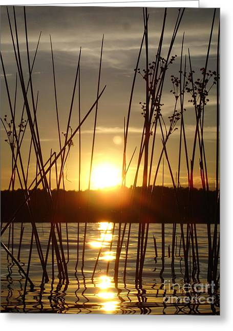 Reeds In A Lake Greeting Card by Chad Natti