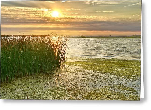 Reeds In The Sunset Greeting Card