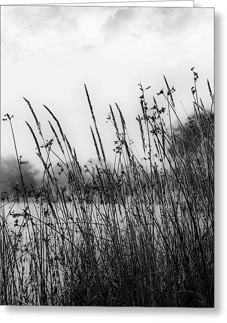 Reeds Of Black Greeting Card