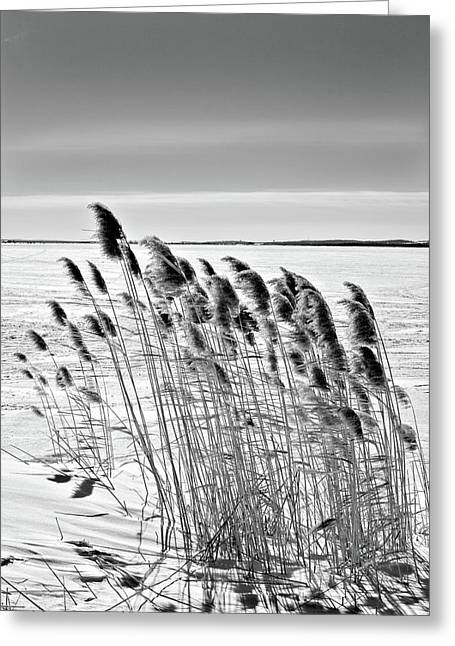 Reeds On A Frozen Lake Greeting Card