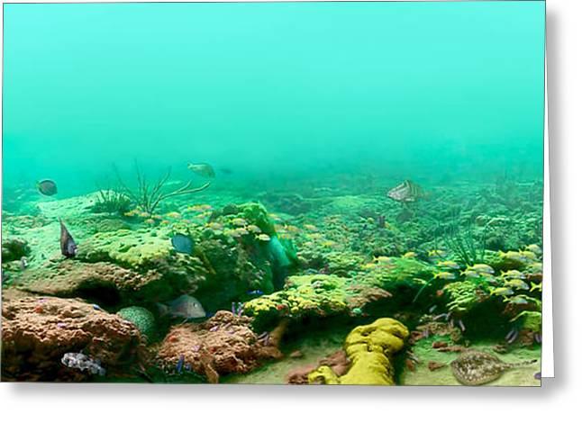 Reef Life Greeting Card by Owen Caddy