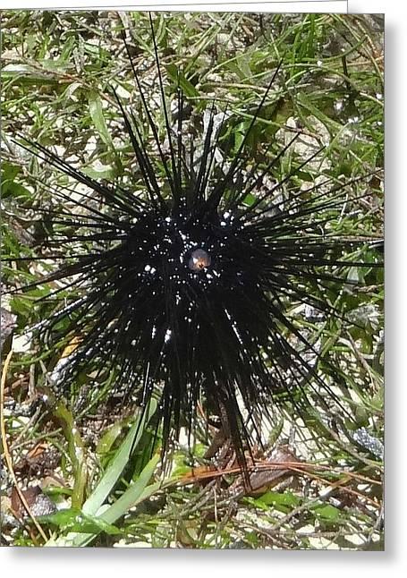 Reef Life - Sea Urchin 2 Greeting Card