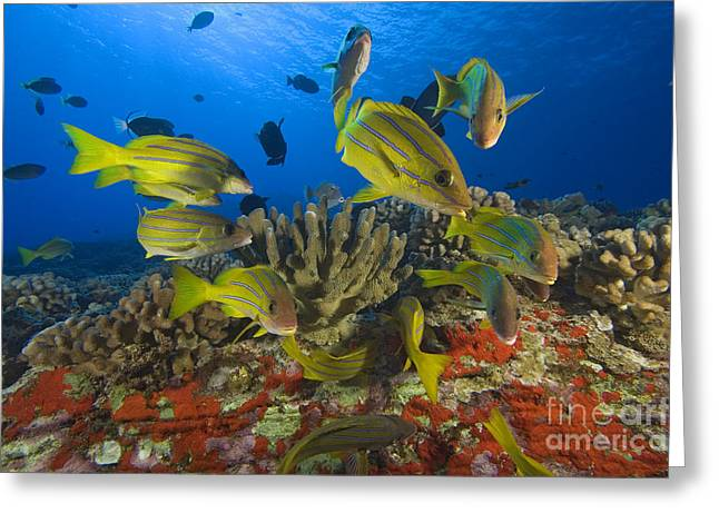 Reef Scene Greeting Card by Dave Fleetham - Printscapes