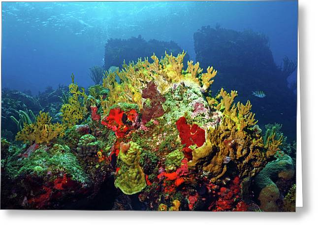 Reef Scene With Divers Bubbles Greeting Card