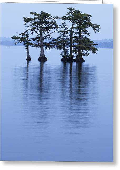 Reelfoot Reflections Greeting Card by Eric Foltz