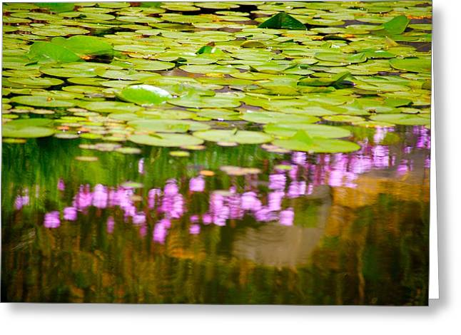 Reflected Flowers And Lilies Greeting Card by Paul Kloschinsky