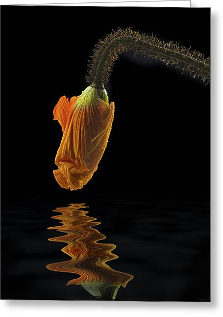 Reflected Icelandic Poppy Greeting Card by Jean Noren