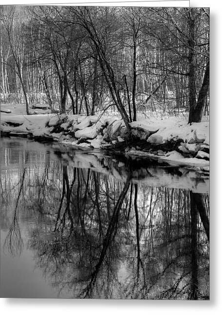 Reflected Trees Greeting Card
