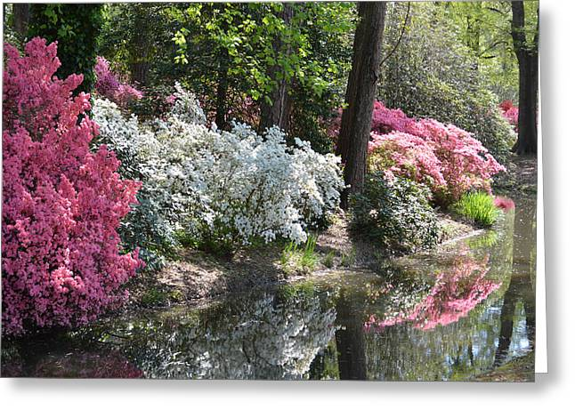 Reflecting Azaleas Greeting Card