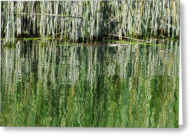 Reflecting Back Greeting Card by Donna Blackhall