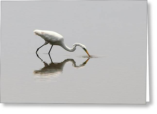 Reflecting Egret Greeting Card by Al Powell Photography USA