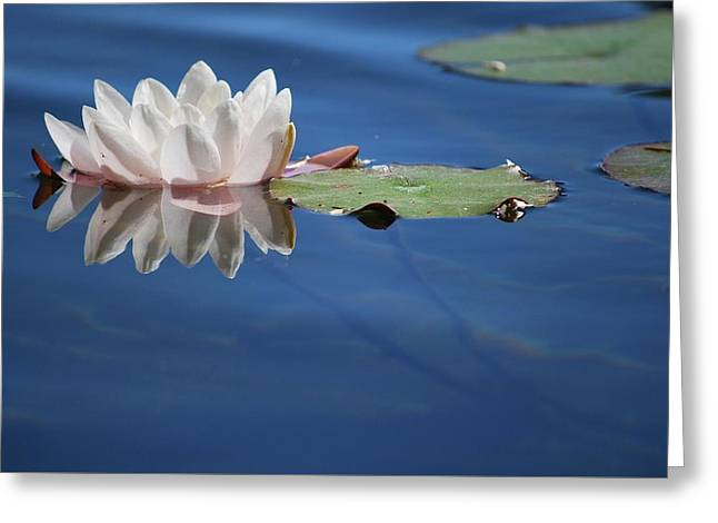 Greeting Card featuring the photograph Reflecting In Blue Water by Amee Cave