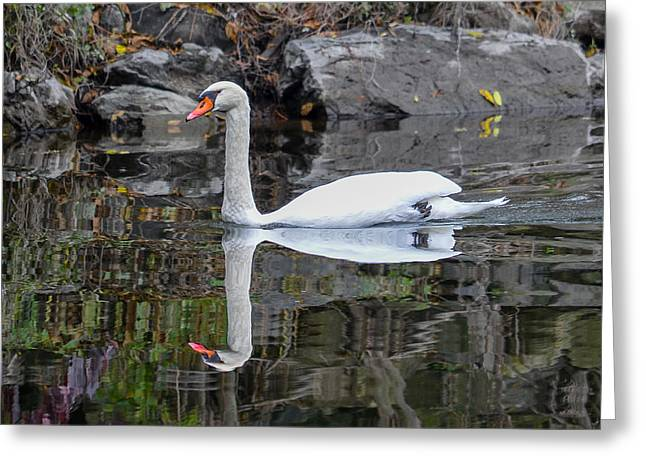 Reflecting Mute Swan Greeting Card