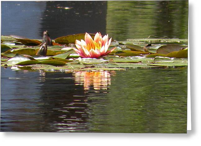 Reflecting Pool Bloom Greeting Card by Gregory Letts