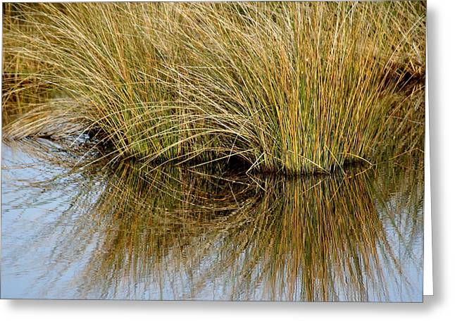 Reflecting Reeds Greeting Card by Marty Koch