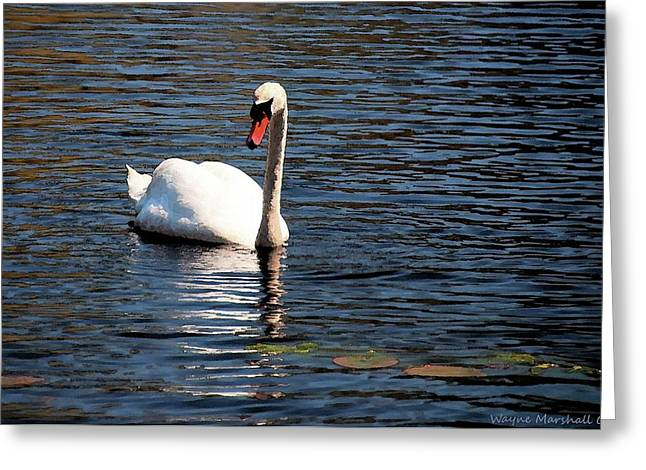 Greeting Card featuring the digital art Reflecting Swan by Wayne Marshall Chase