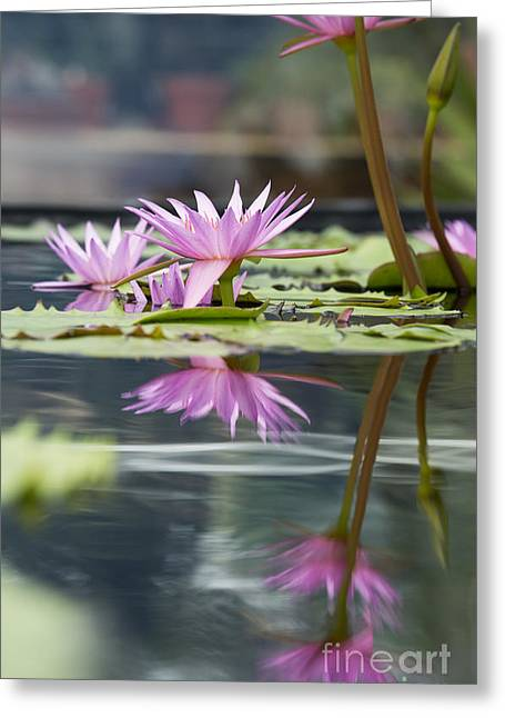 Reflecting Waterlily  Greeting Card by Tim Gainey