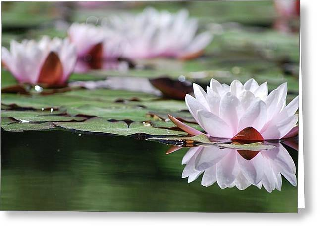 Greeting Card featuring the photograph Reflection by Amee Cave
