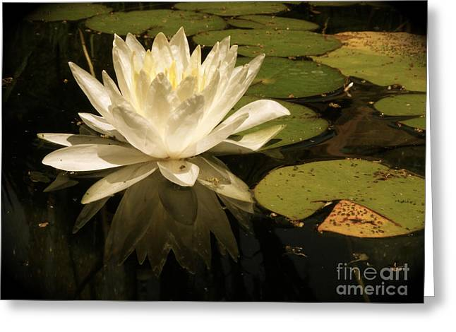 Reflection Greeting Card by Amy Strong