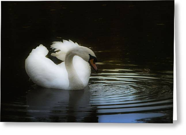 Reflection Greeting Card by Deb Cohen