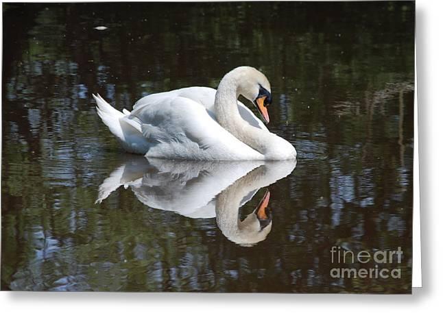 Reflection Greeting Card by Doug Thwaites