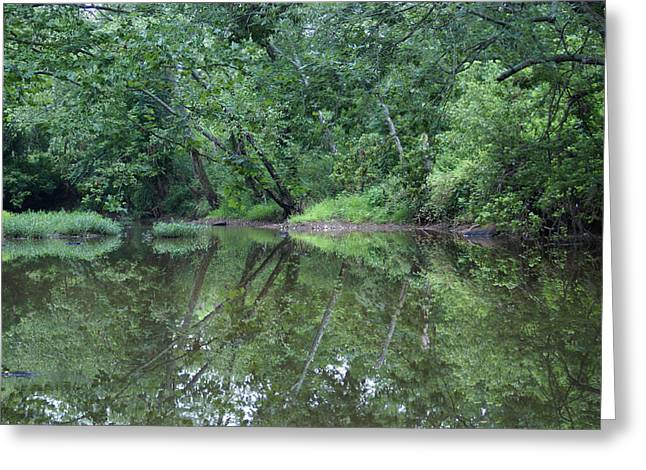 Greeting Card featuring the photograph Reflection by Heidi Poulin