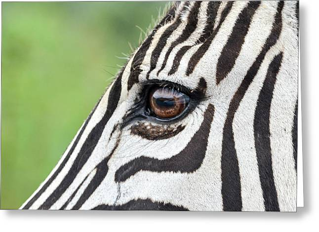 Reflection In A Zebra Eye Greeting Card