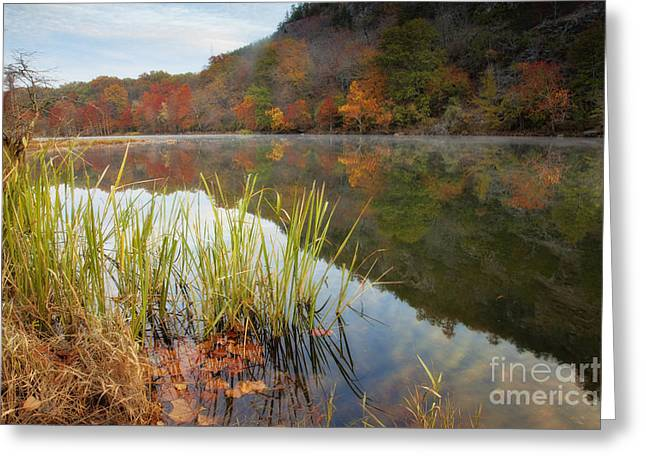 Reflection In The Fort River Greeting Card by Iris Greenwell