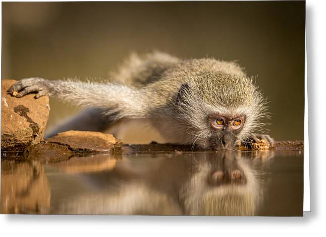 Reflection Greeting Card by Jaco Marx