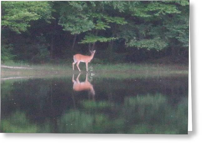 Reflection Greeting Card by Jeffrey Koss