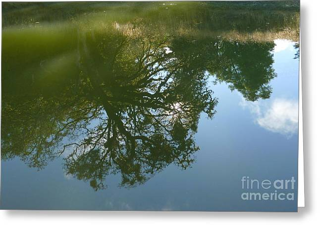 Reflection Greeting Card by JoAnn SkyWatcher
