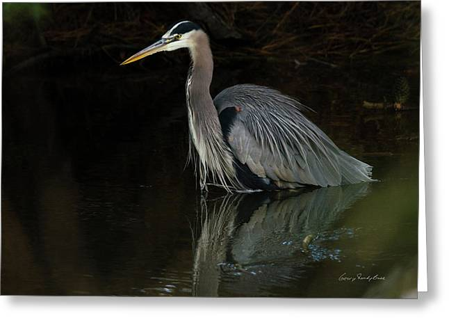 Reflection Of A Heron Greeting Card by George Randy Bass