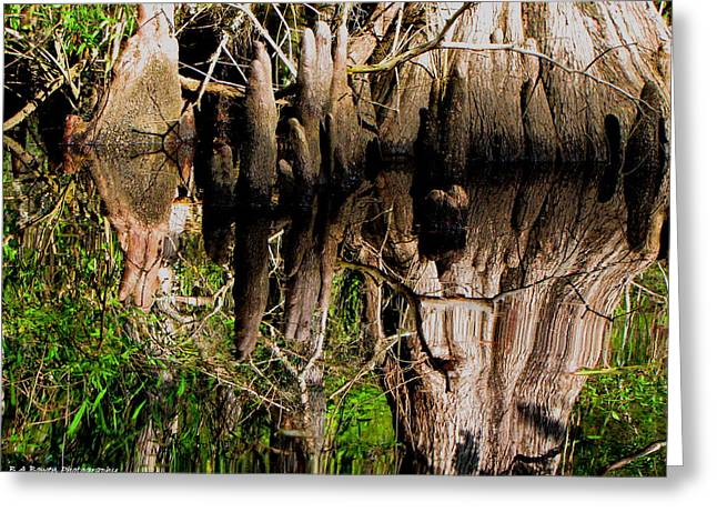 Reflection Of Cypress Knees Greeting Card by Barbara Bowen