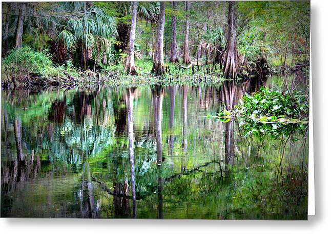 Reflection Of Cypress Trees Greeting Card by Carol Groenen