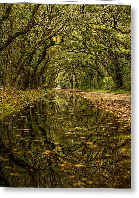 Reflection Of Live Oaks  Greeting Card by Serge Skiba