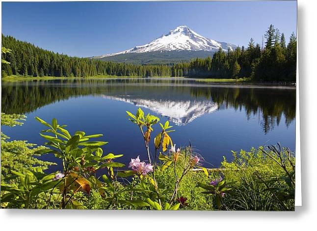 Reflections Of Sky In Water Greeting Cards - Reflection Of Mount Hood In Trillium Greeting Card by Craig Tuttle