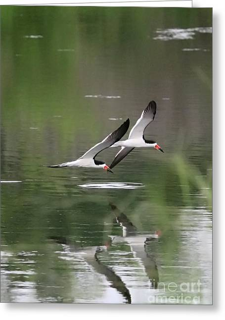 Reflection Of Skimmers Over The Pond Greeting Card
